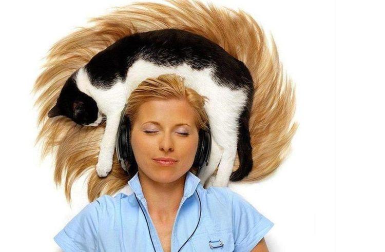 Кот спит на голове хозяйки