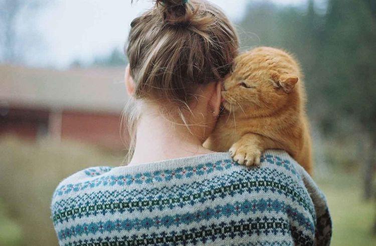 Кот вылизывает ухо хозяйке