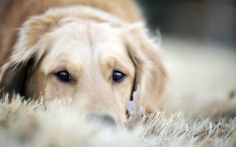 Собака после стерилизации