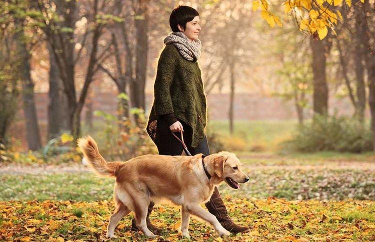 Женщина выгуливает ретривера