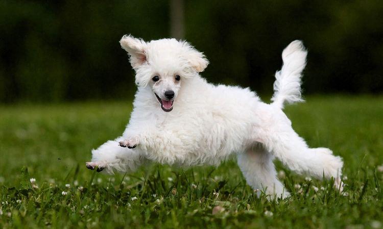 Здоровая собака