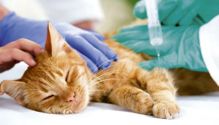 Кот у ветеринара