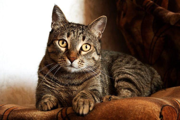 Полосатая кошка сидит на диване