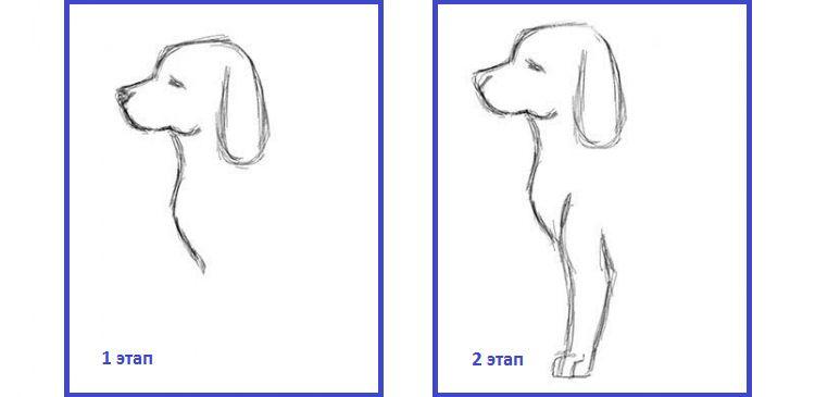 Рисунок контура собаки