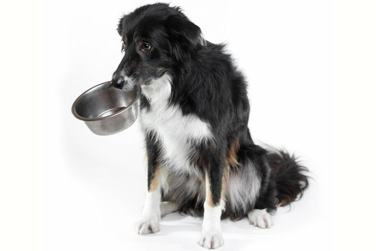 Собака держит миску