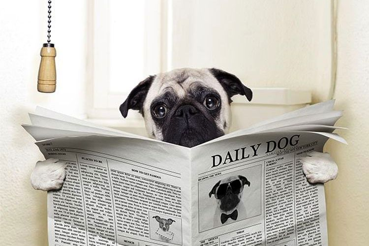 Собака на унитазе с газетой