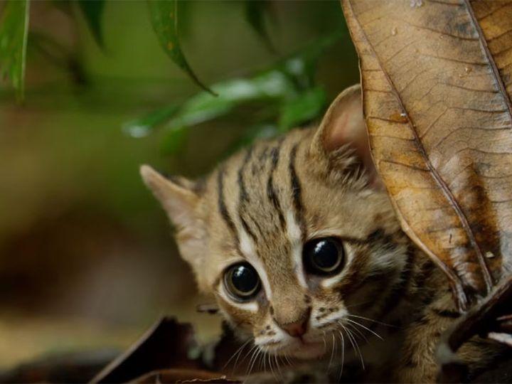 Ржавая кошка прячется