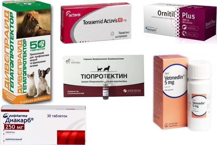 Препараты для лечения водянки (асцита) у собак