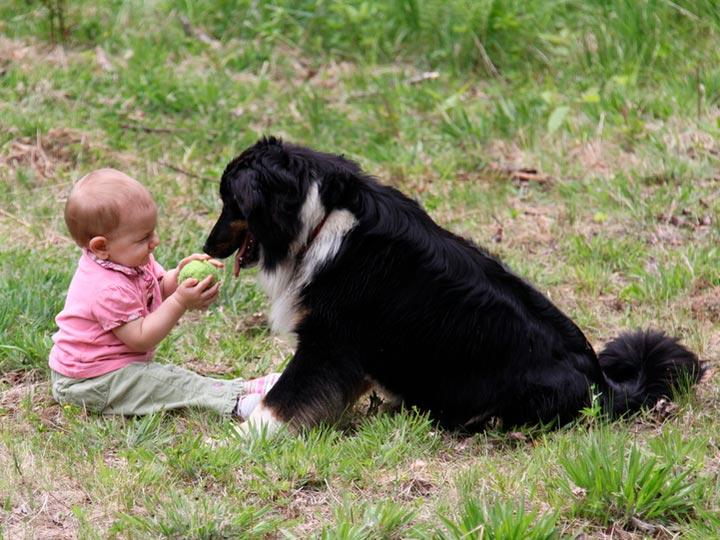 английская овчарка и ребенок