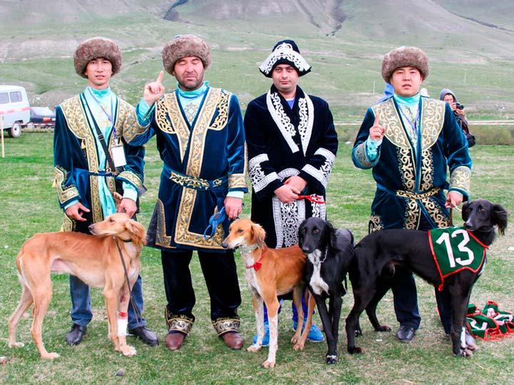 казахская борзая тазы