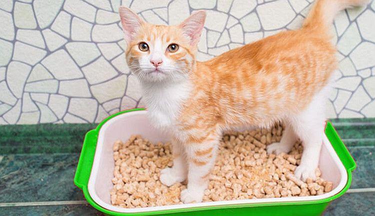 Рыжий кот в лотке