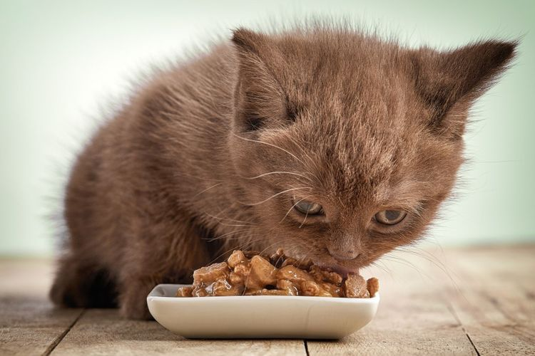 Котенок ест влажный корм