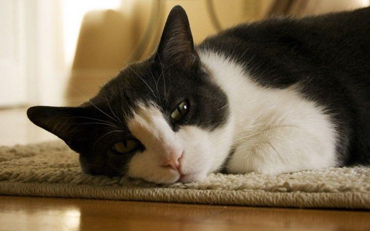 Черно-белая кошка на подстилке