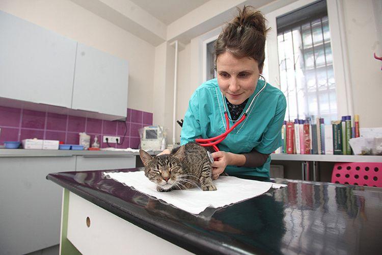 Осмотр кота ветеринаром