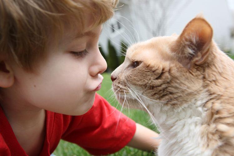 Ребенок целует кота
