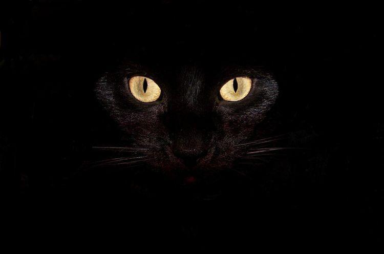 Приметы про кошек в доме и на улице
