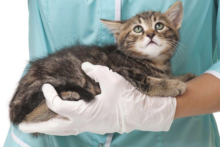 Котенок на руках ветеринара
