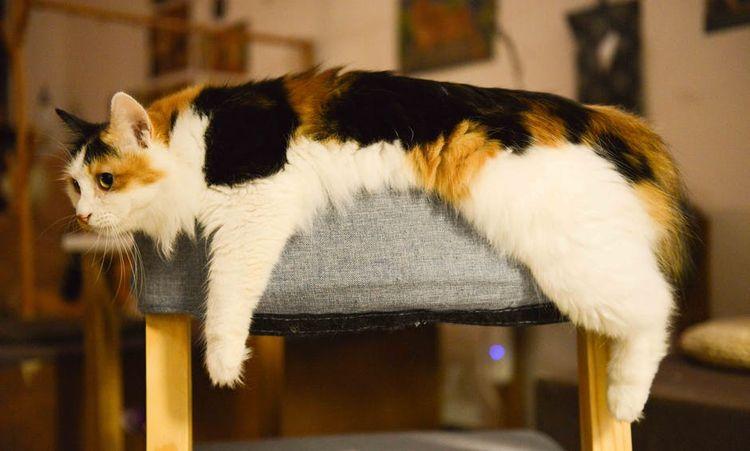 Кот на лежаке