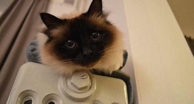 Аскариды у кошек пути заражения диагностика и методы лечения