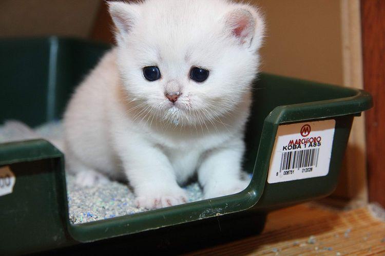 Белый котенок в лотке