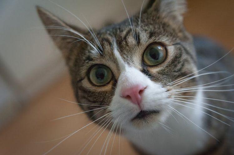 Кошкин нос