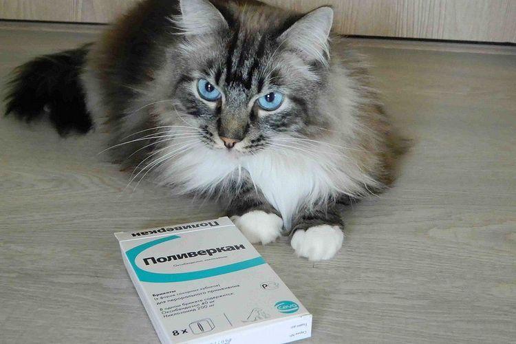 Поливеркан для кошек