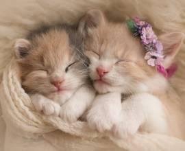аллергия у кота лечение препараты