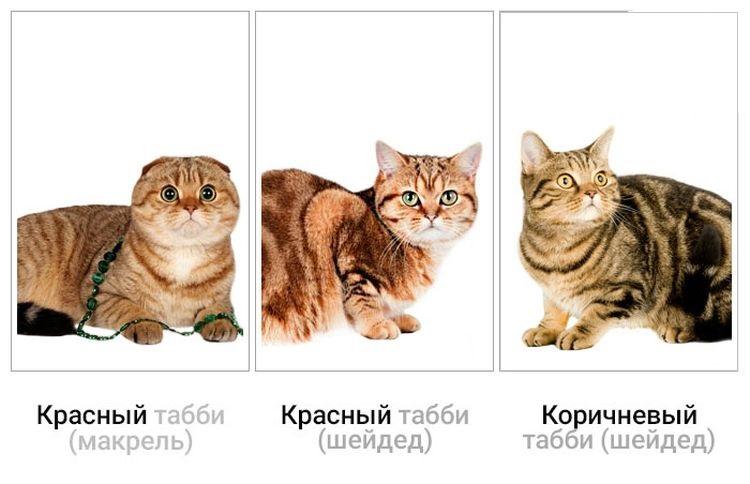 Примеры окрасов котов