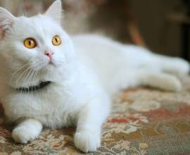 у собаки аллергия на кошку