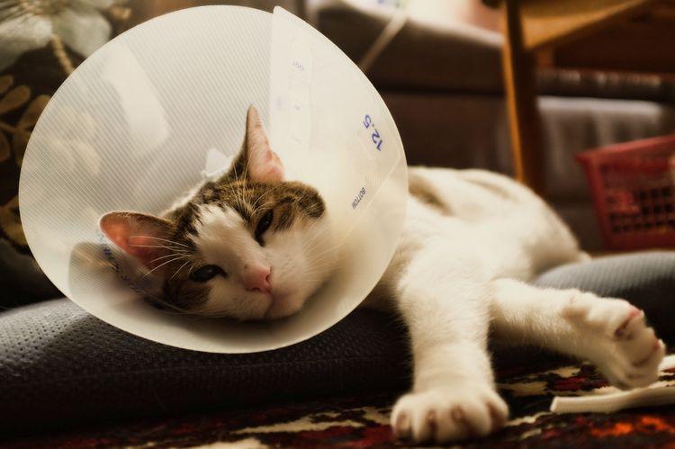 Как сделать воротник для кошки фото 415