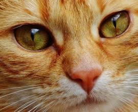 как проявляется аллергия у собак на корм
