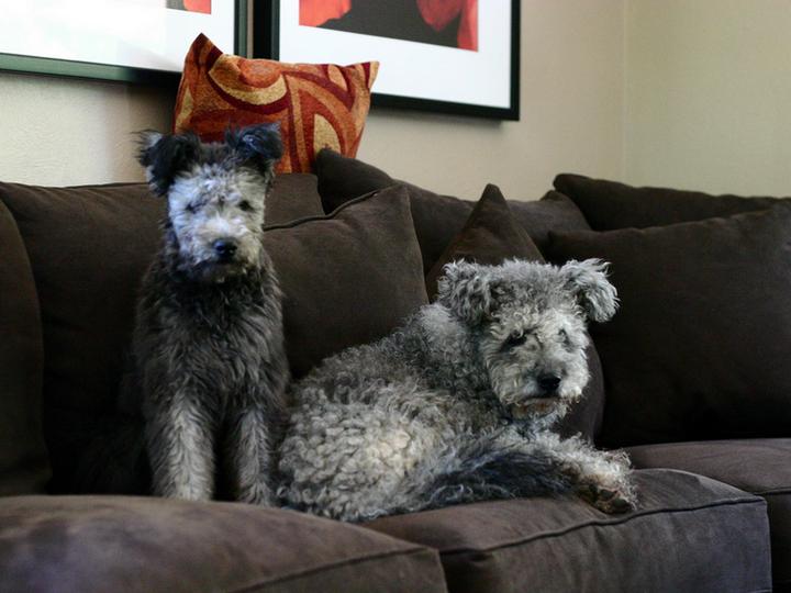 два пуми на диване