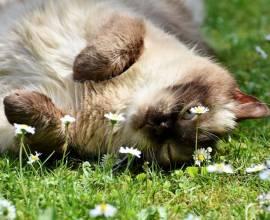 Кот лежит в траве
