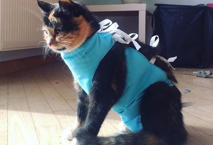 Кошка в послеоперационном бандаже