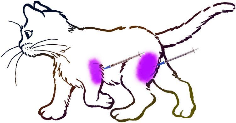 Внутримышечная инъекция кошке