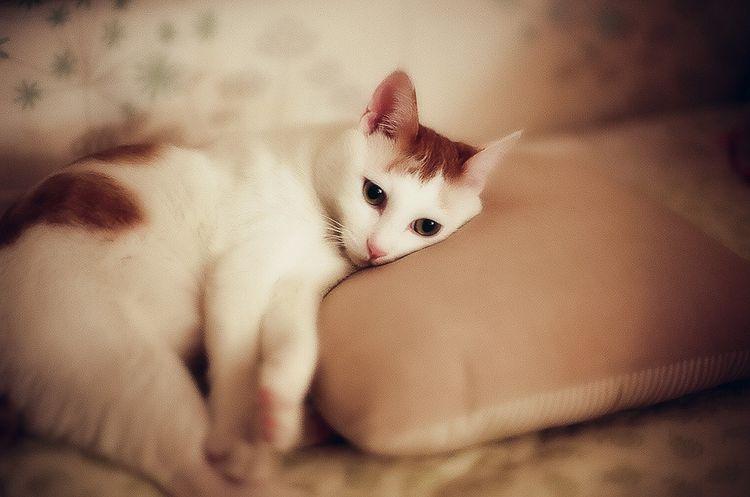 Заболевания у кошек