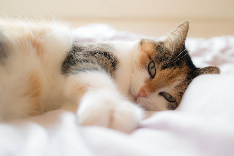 Спокойная кошка