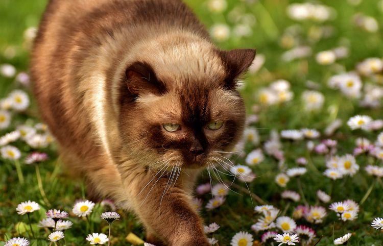 Кошка идет по газону