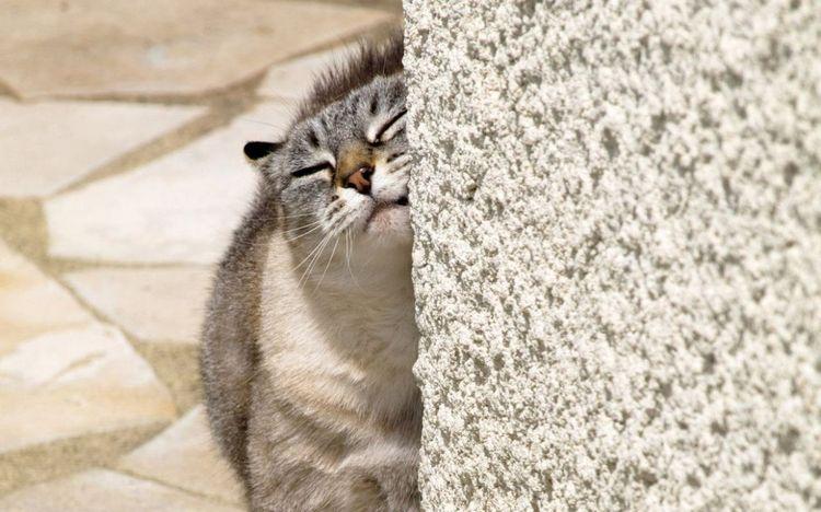 Кошка трется
