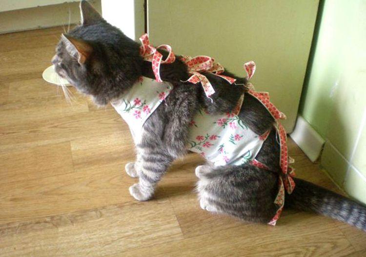 Сколько дней кошке нужно носить попону после стерилизации thumbnail