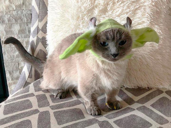 кот йода кинкалоу