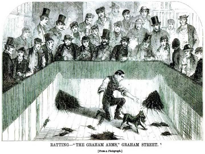 травля крыс гравюра 19 века