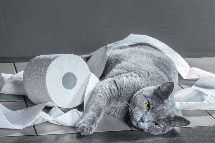 Кот и туалетная бумага