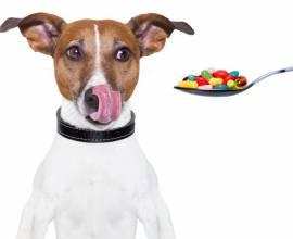Собаке дают таблетки