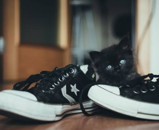 Черный котенок в кедах