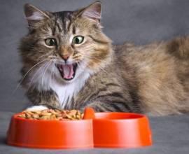 Кот у миски с сухим кормом