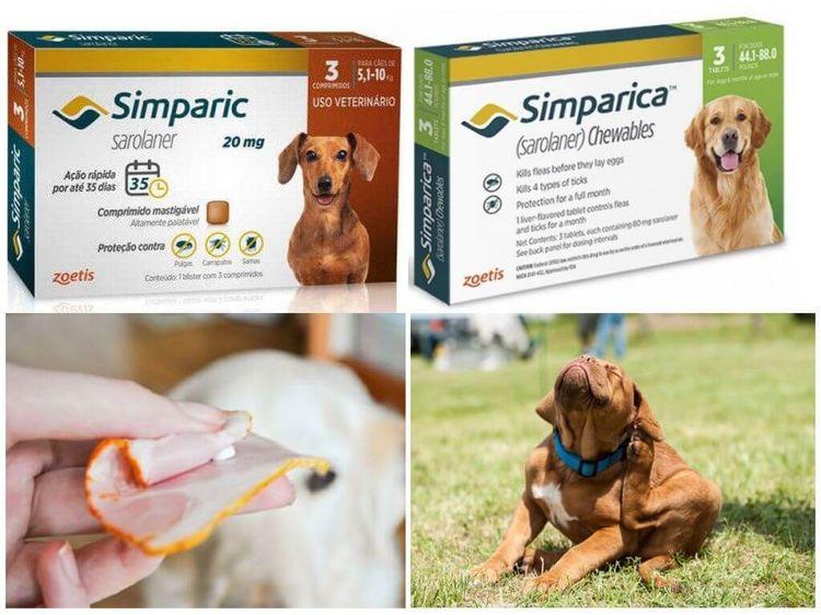Как дать препарат собаке