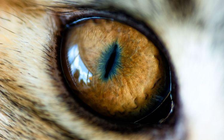 Фото глаза кошки