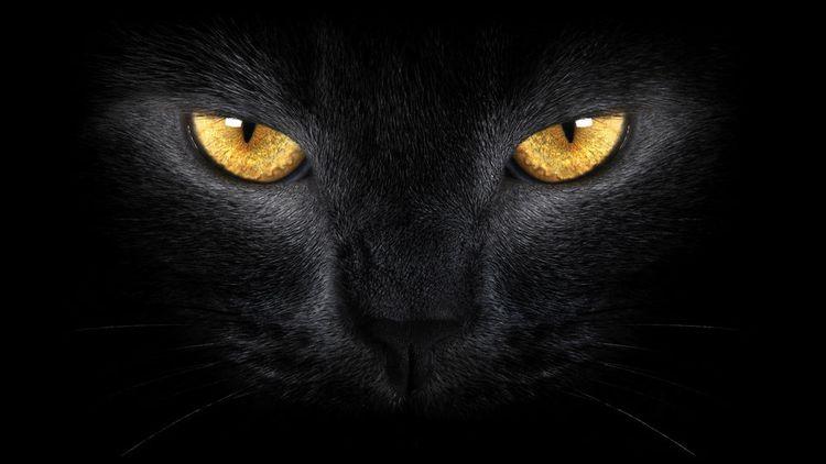 Черная кошка в темноте