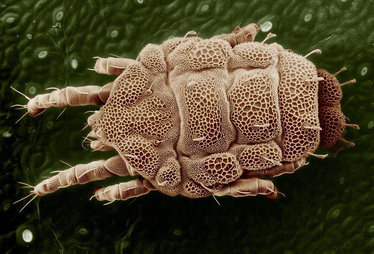 опасность паразитов в организме